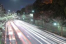 靖国神社の満開の夜桜の画像001