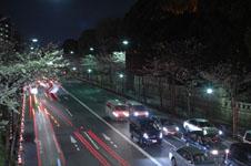 靖国神社の満開の夜桜の画像002