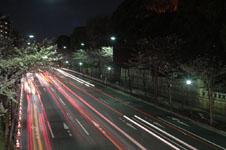 靖国神社の満開の夜桜の画像003