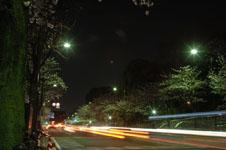 靖国神社の満開の夜桜の画像013