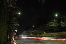 靖国神社の満開の夜桜の画像014