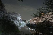 千鳥ヶ淵の満開の夜桜の画像016