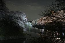 千鳥ヶ淵の満開の夜桜の画像018