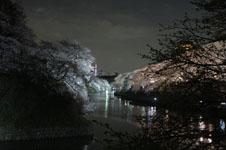 千鳥ヶ淵の満開の夜桜の画像019