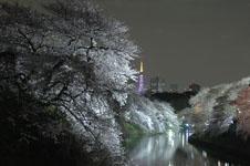 千鳥ヶ淵の満開の夜桜の画像021