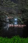 千鳥ヶ淵の満開の夜桜の画像024