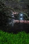 千鳥ヶ淵の満開の夜桜の画像025
