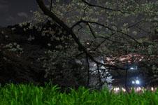 千鳥ヶ淵の満開の夜桜の画像026