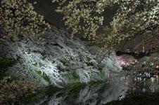 千鳥ヶ淵の満開の夜桜の画像031