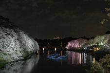 千鳥ヶ淵の満開の夜桜の画像033