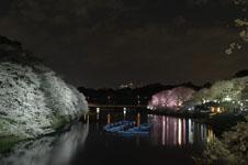 千鳥ヶ淵の満開の夜桜の画像034