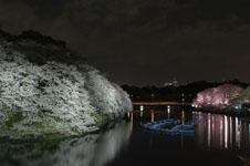 千鳥ヶ淵の満開の夜桜の画像035