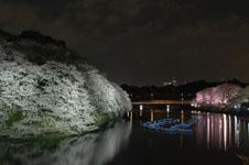 千鳥ヶ淵の満開の夜桜の画像036