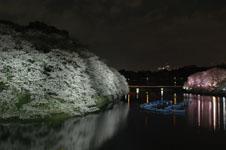 千鳥ヶ淵の満開の夜桜の画像037