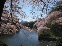 千鳥ヶ淵の満開の桜の画像004