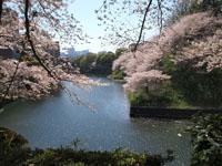 千鳥ヶ淵の満開の桜の画像005