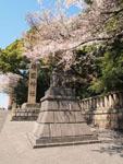 靖国神社の満開の桜の画像001