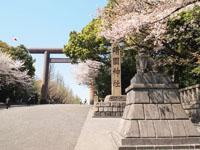 靖国神社の満開の桜の画像002
