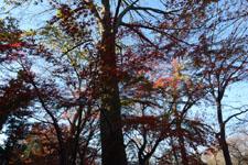 井の頭恩賜公園の紅葉の画像003