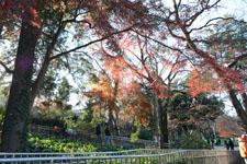 井の頭恩賜公園の紅葉の画像005