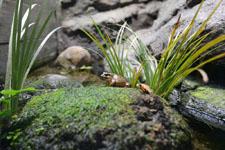 井の頭動物園の蛙の画像003