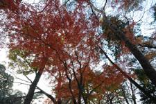 井の頭恩賜公園の紅葉の画像012