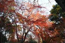 井の頭恩賜公園の紅葉の画像013