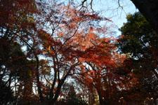 井の頭恩賜公園の紅葉の画像014
