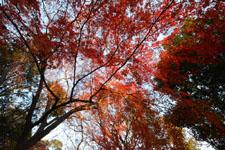 井の頭恩賜公園の紅葉の画像015