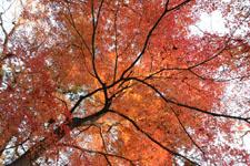 井の頭恩賜公園の紅葉の画像017