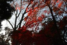 井の頭恩賜公園の紅葉の画像021
