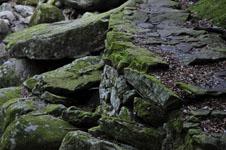 滑床渓谷の苔