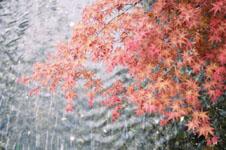木屋町通り高瀬川の紅葉