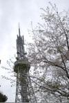 名古屋テレビ塔と桜の画像005