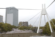 久屋大通公園セントラルブリッジと桜の画像002