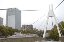 久屋大通公園セントラルブリッジと桜の画像003