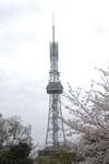 名古屋テレビ塔と桜の画像008