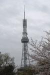 名古屋テレビ塔と桜の画像010