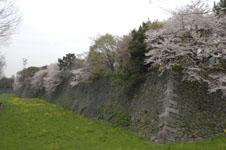 名古屋城のお堀の桜の画像002
