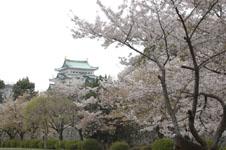 名古屋城と桜の画像002