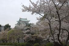 名古屋城と桜の画像003