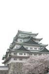 名古屋城と桜の画像005