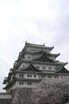 名古屋城と桜の画像006
