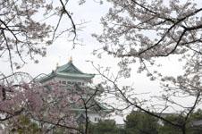 名古屋城と桜の画像007