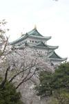 名古屋城と桜の画像008