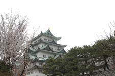 名古屋城と桜の画像009