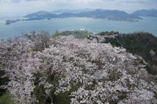 岩城島の桜の画像004