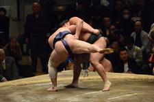 大相撲 青狼 武士と鏡桜 南二の画像012
