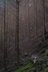 床鍋谷の林の画像001