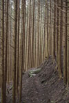 床鍋谷の林の画像002